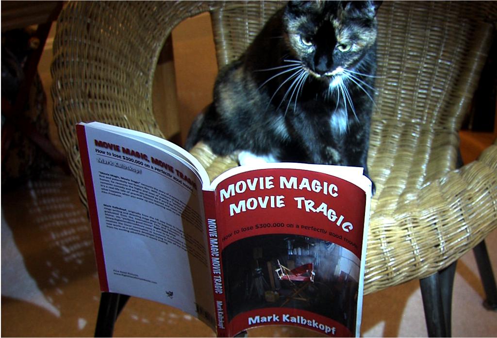 Cat reads book